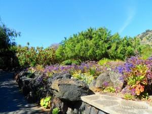Jardin Canario1