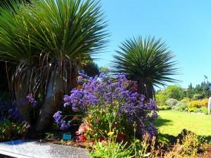 Jardin Canario2