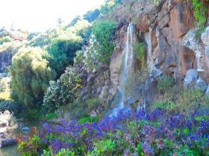 Jardin Canario3